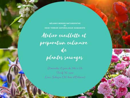 Atelier plantes et fleurs sauvages