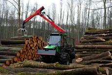 Holzernte in Hirschfelde
