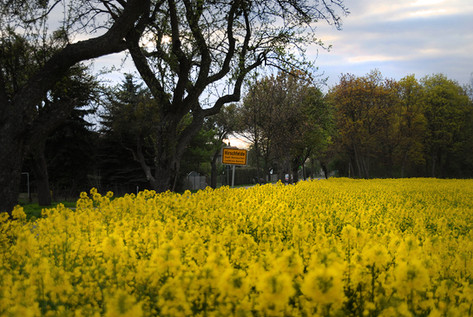 Frühling in Hirschfelde
