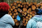 Aus dem Leben eines Baumes  Was erzählt uns die Schnittfläche eines Stammes über ein Baumleben (hier: Kiefer)?