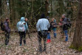 Aufbruch zur Waldführung in Hirschfelde - im Vordergrund eine Spätblühende Traubenkirsche, die gerade austreibt. Auch die haben wir in Hirschfelde, allerdings ist das Vorkommen dieser ursprünglich aus Nordamerika stammenden Art, die sich invasiv ausbreitet, hier zum Glück lokal begrenzt.