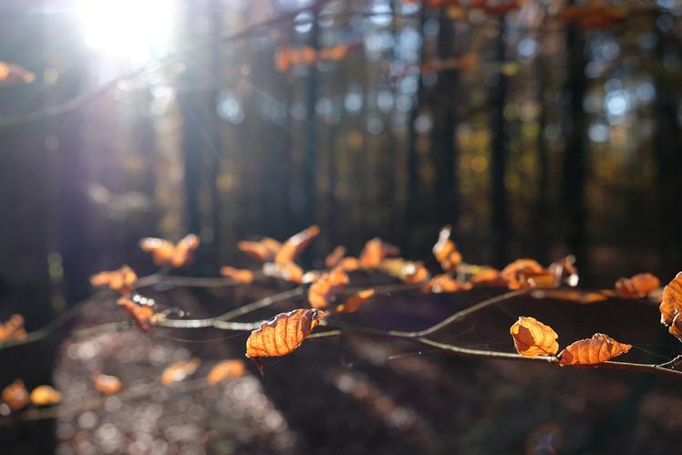 Herbst in Hirschfelde