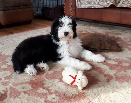 Bella 3 months