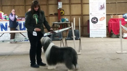 So pleased with both Travis and Harrison today who attended Nottingham foresters open show at Newark