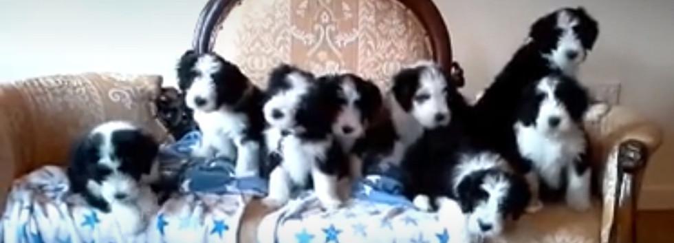 puppyx8 (2).jpg