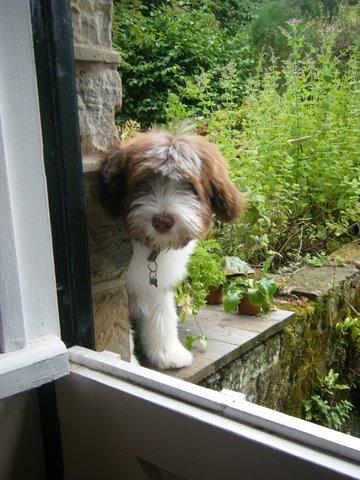 Let me in! 4 months!.jpg
