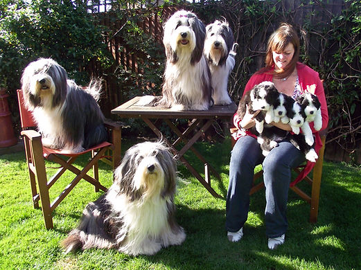 Debbeacol Bearded Collies