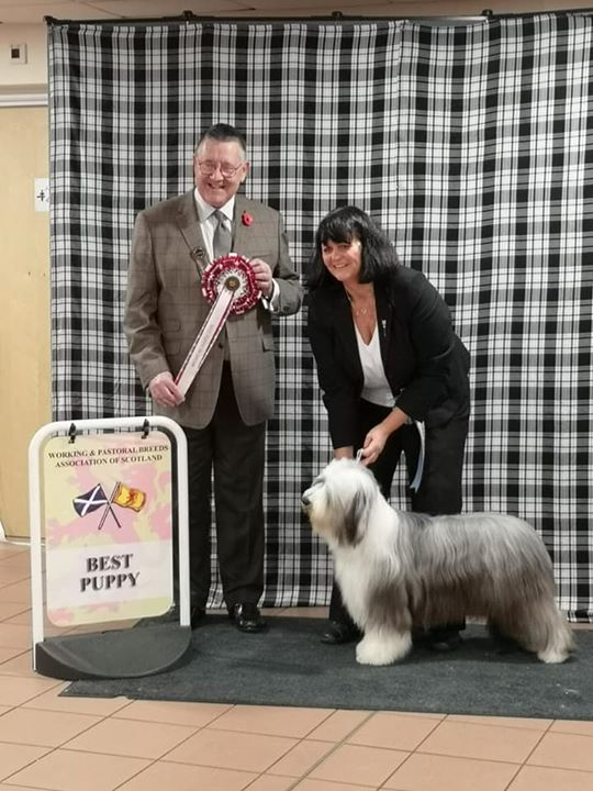 Best Puppy In Show 2019 W&PBAS
