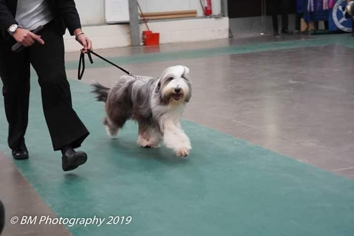 Scottish Bearded Collie Club