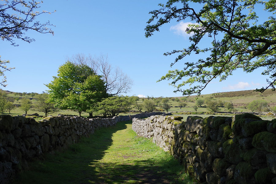 Green Lane on Dartmoor