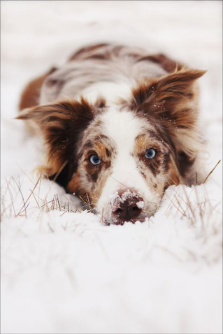 Cold weather is coming! Tips for our 4-legged friends