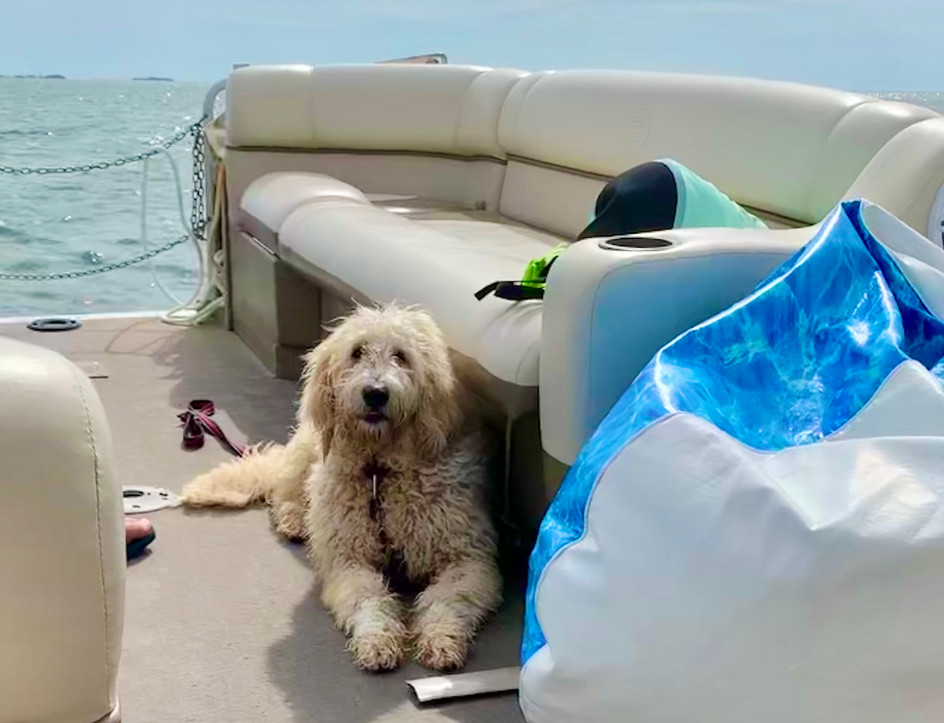Sky the golden doodles day on the water