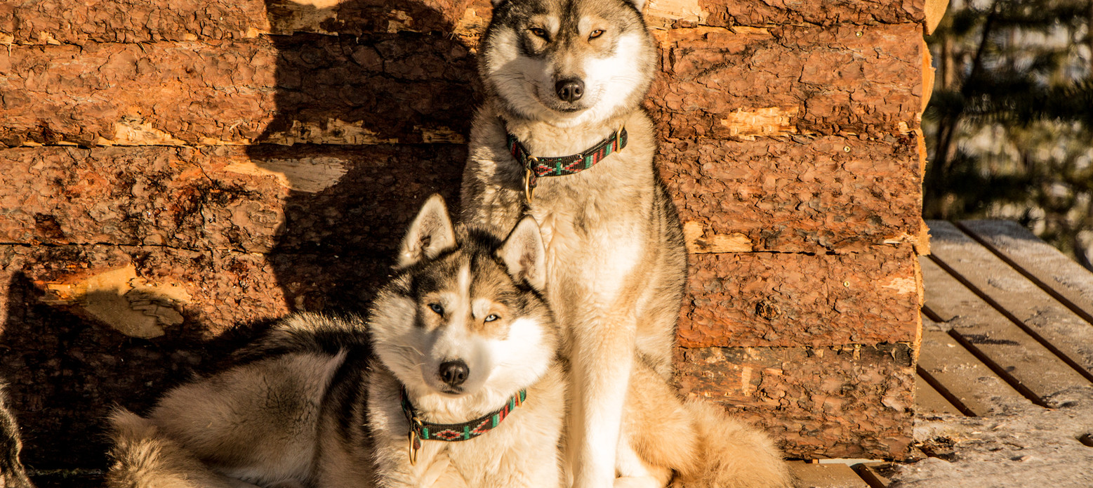 Akani & Chinook