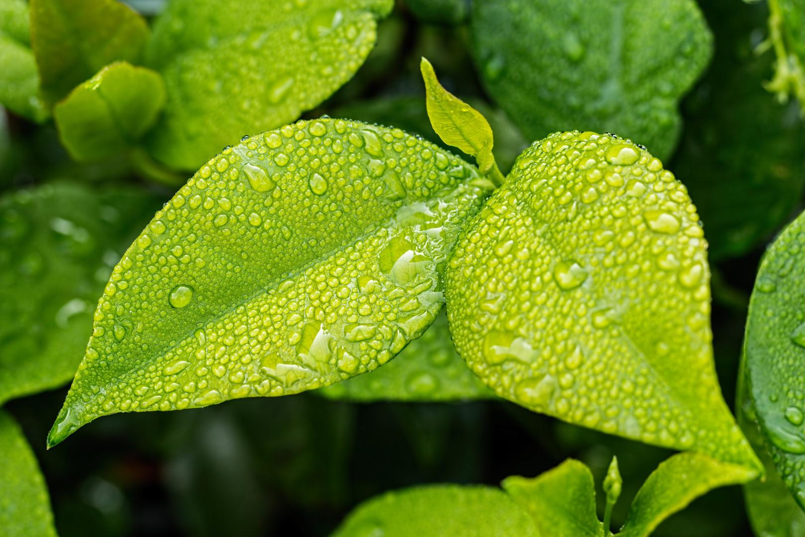 leaf-1001679.jpg