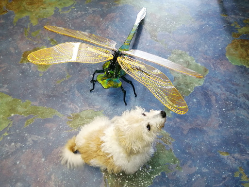 Dragonfly and Pip