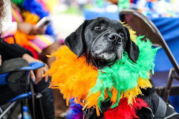 black-dog-wearing-fur-decor-2306831.jpg