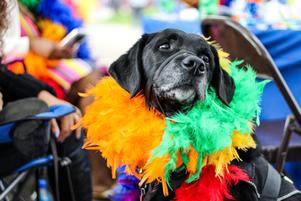 pets enjoying walsall pride