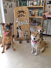 カットサロン_3_dogs.jpg