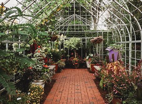 Plant Sale Aug 17, 19 & 21