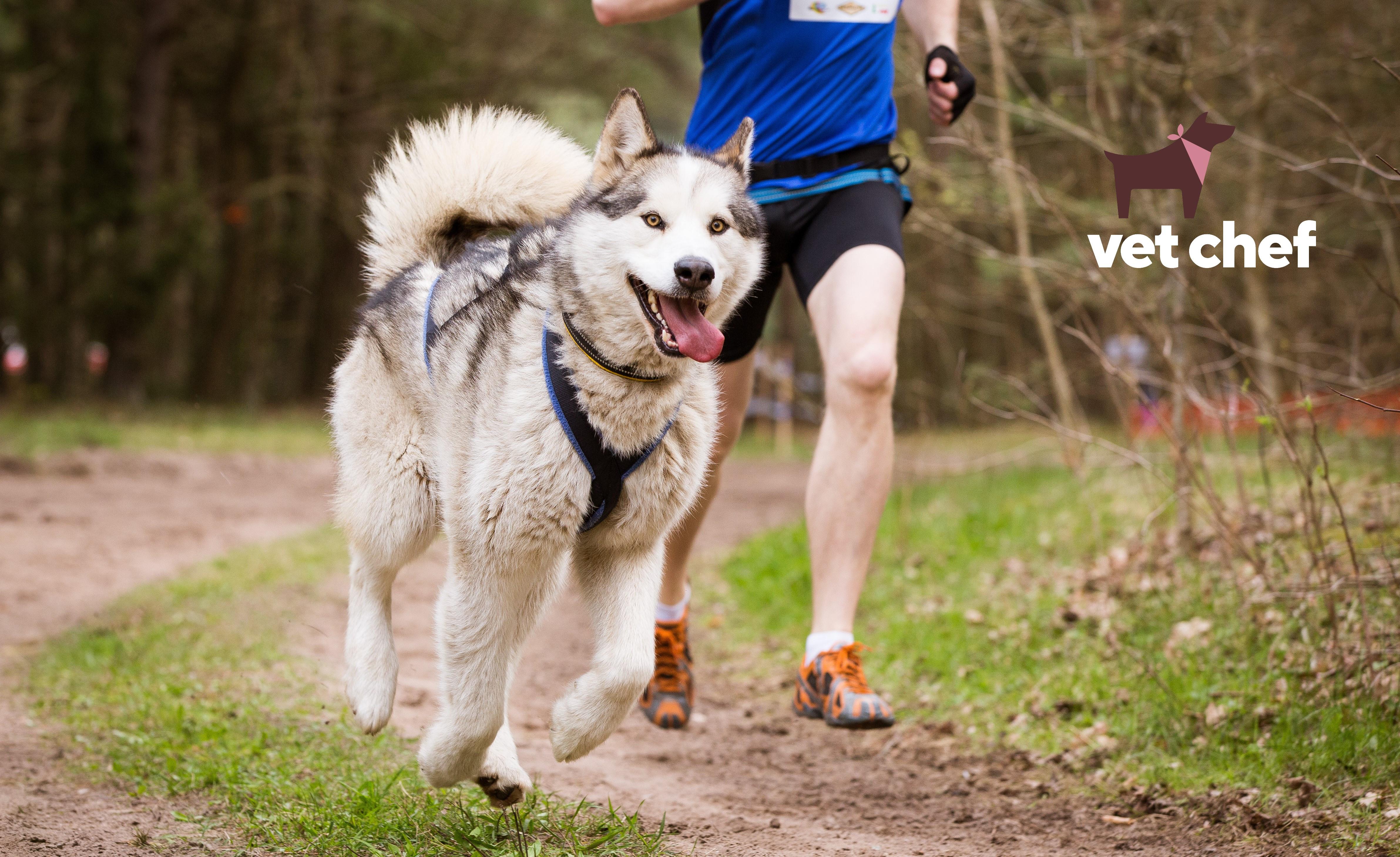 Working & sport dog formulation