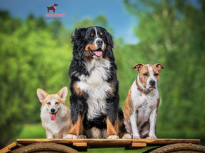 Why you need to feed toy and giant breeds differently