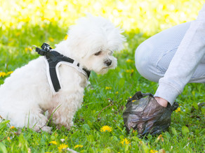 Reducing your dog's 'poop-print'