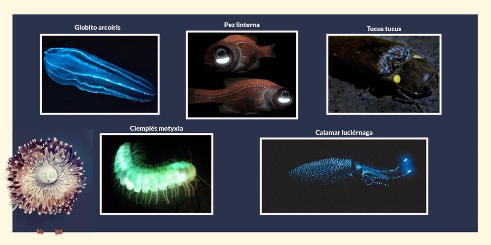 Bioluminiscentes