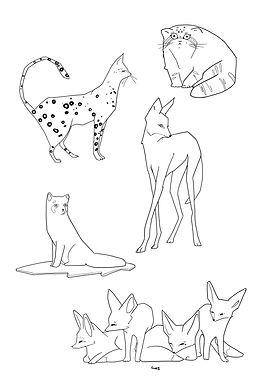 linea_cats.jpg