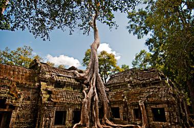 Kubota-Kubota- Angkor Wat-1.jpg