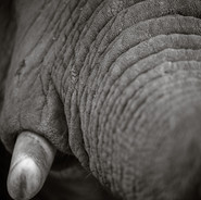 Kubota-0358 South Africa.jpg