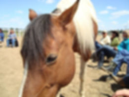 Mindfulness based counseling, equine assisted therapy, Mindful Trails Counseling LLC, Mindfulness based therapy