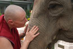 communing with an elephant in Bodhgaya, India
