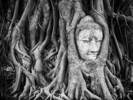 Environmental Activism through a Buddhist Lens