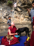 leading a pilgrimage in Nepal with visiting stray dogs