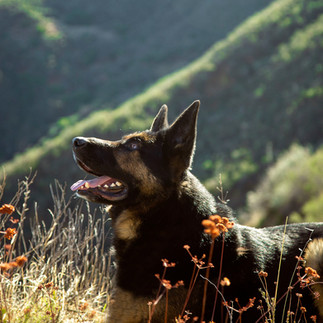 What's a Dog Adventure Without a Vista!