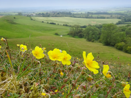 Exciting Partnership with Yorkshire Coast Nature