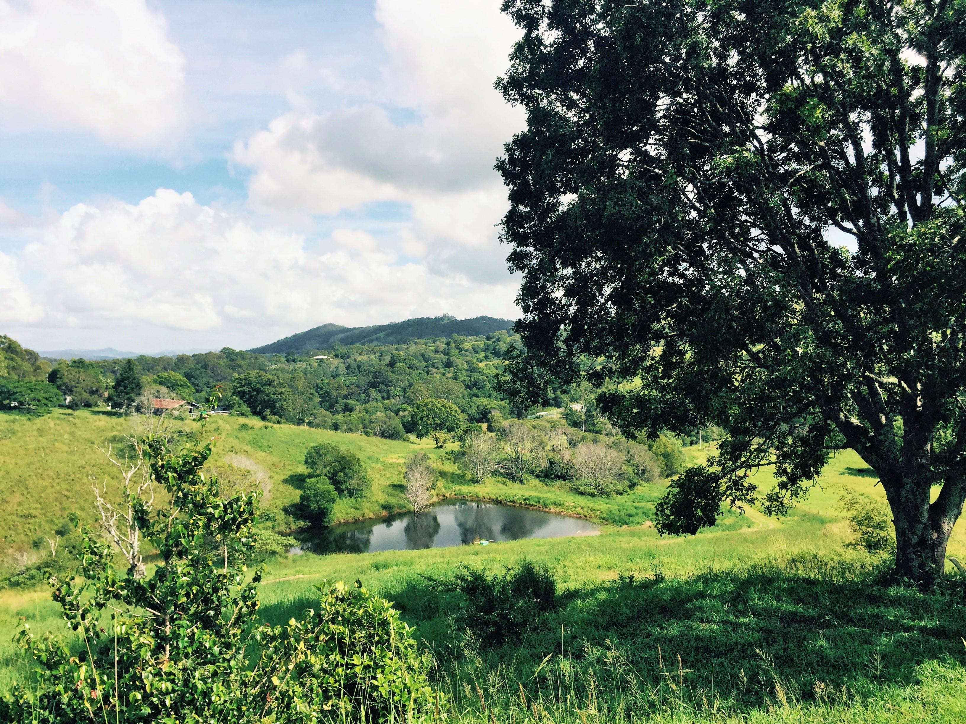 Lush hinterland acreage