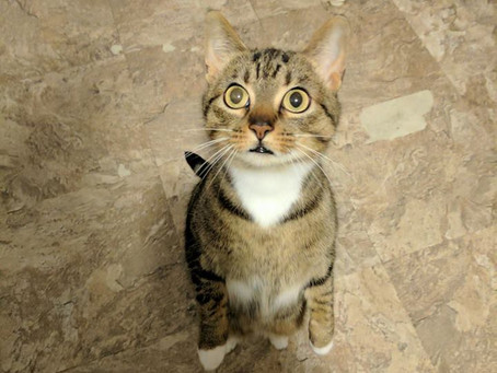 Cat Sitting - What is that?