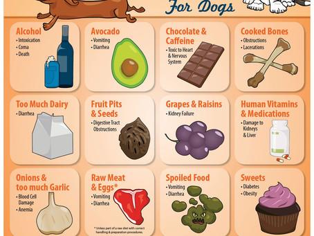 Have a Pet Safe July 4th
