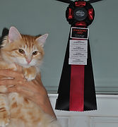 southwestern ontario cat breeder cattery show cats awards breed standard red coat rare golden