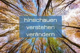 trees-5605176_1280_edited.jpg