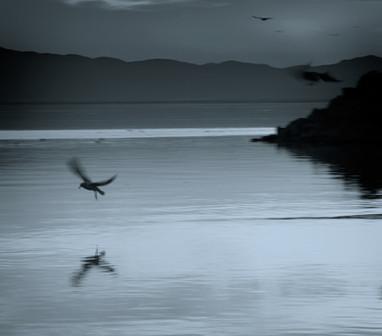 flurried flight