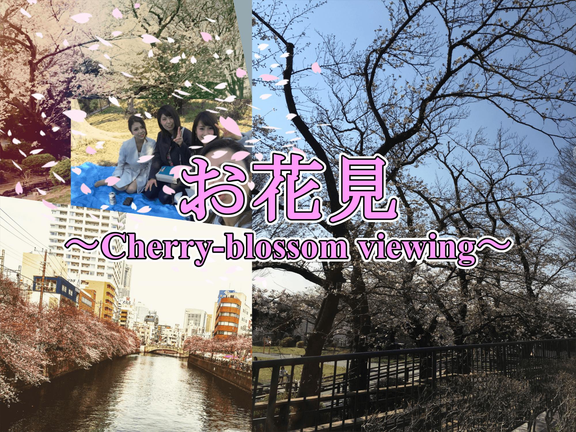 お花見~Cherry-blossom viewing~