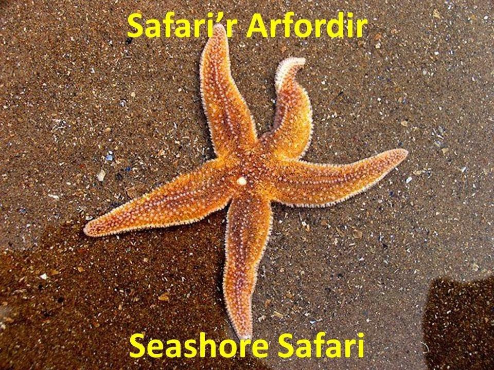 Seashore Safari Aug 6th/7th