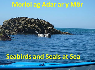 Seabirds and Seals at Sea1.jpg
