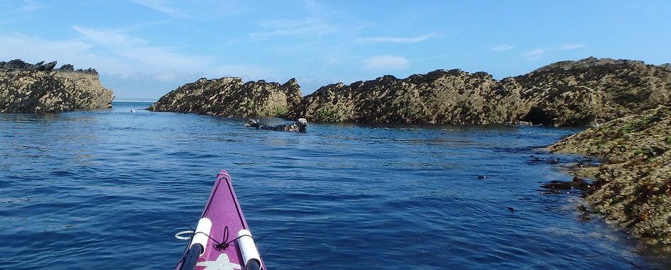 panorama seal in water crop.jpg