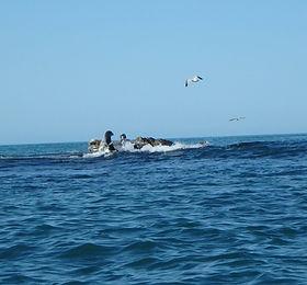 Seals on rocks
