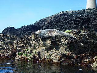Seal on rocks.jpg