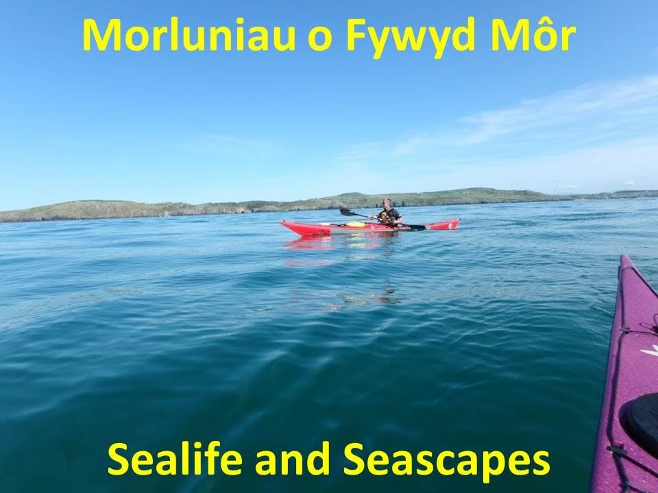 Sealife and Seascapes Aug 8/9th NOW FULL