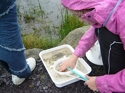 pond dipping.jpg